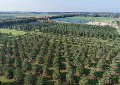 Pinus sylvestris Luftaufnahme