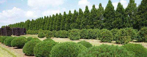 Vormnaaldbomen