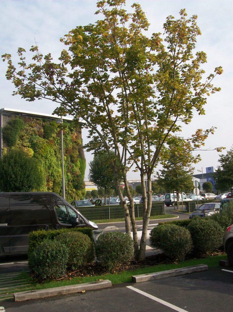 Compagnie de Phalsbourg Ste Geneviève des Bois CC Jupiter website