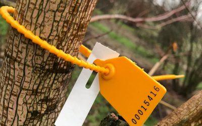 Bäume online live ausbinden