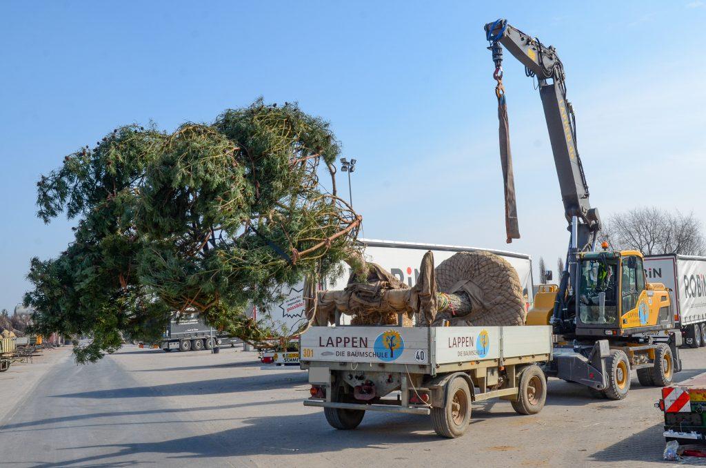 1 Verladung Pinus für LUX (19)