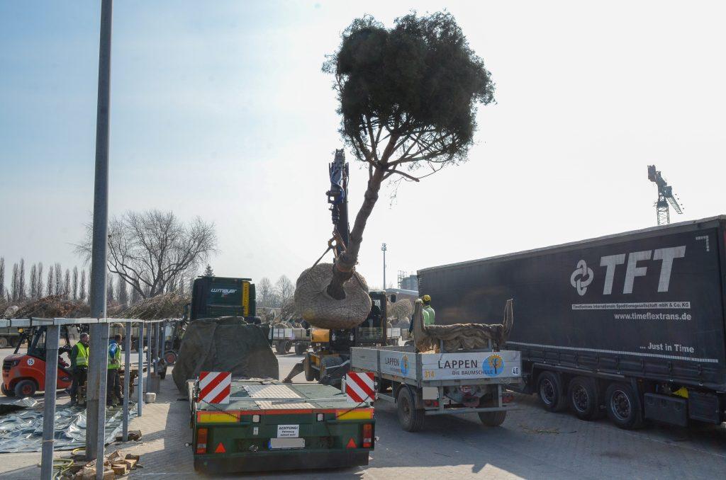 3 Verladung Pinus für LUX (4)