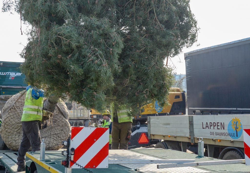 4 Verladung Pinus für LUX (9)