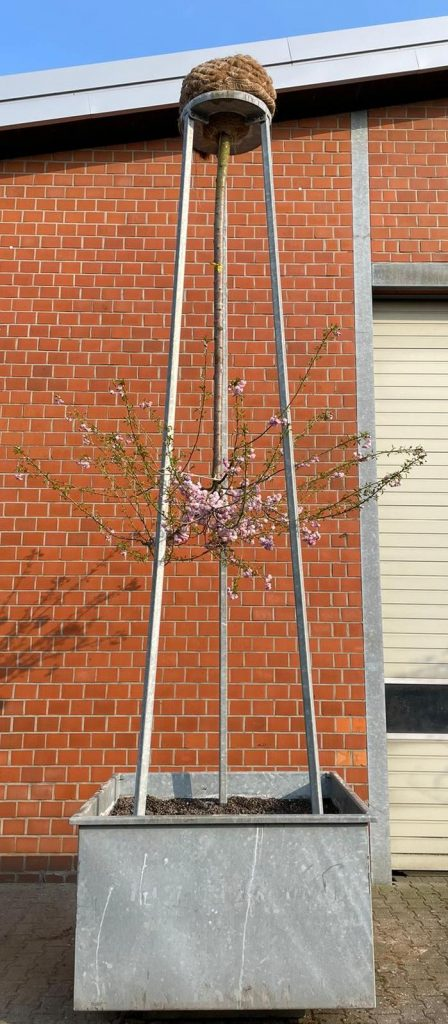 3 hängende Gärten