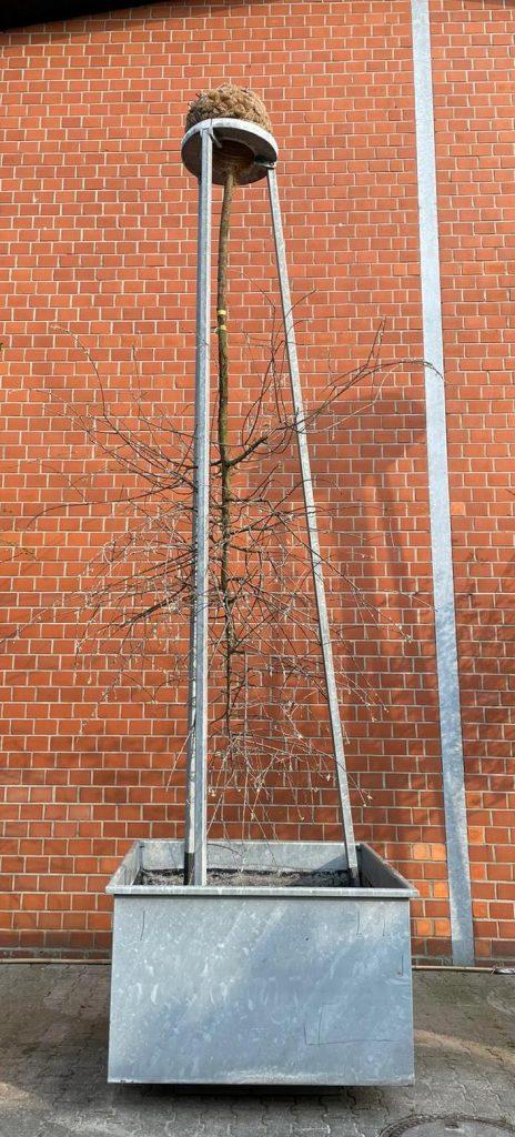 4 hängende Gärten