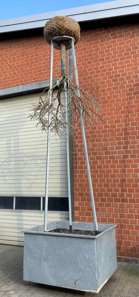6 hängende Gärten