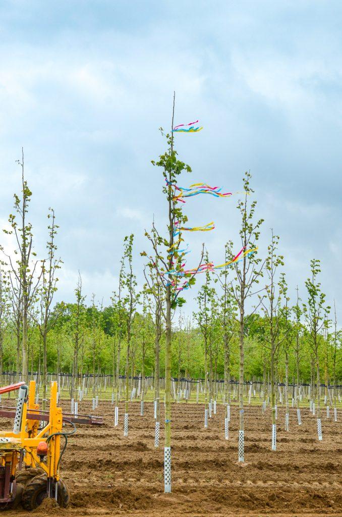 Letzter Baum 2021 (6)